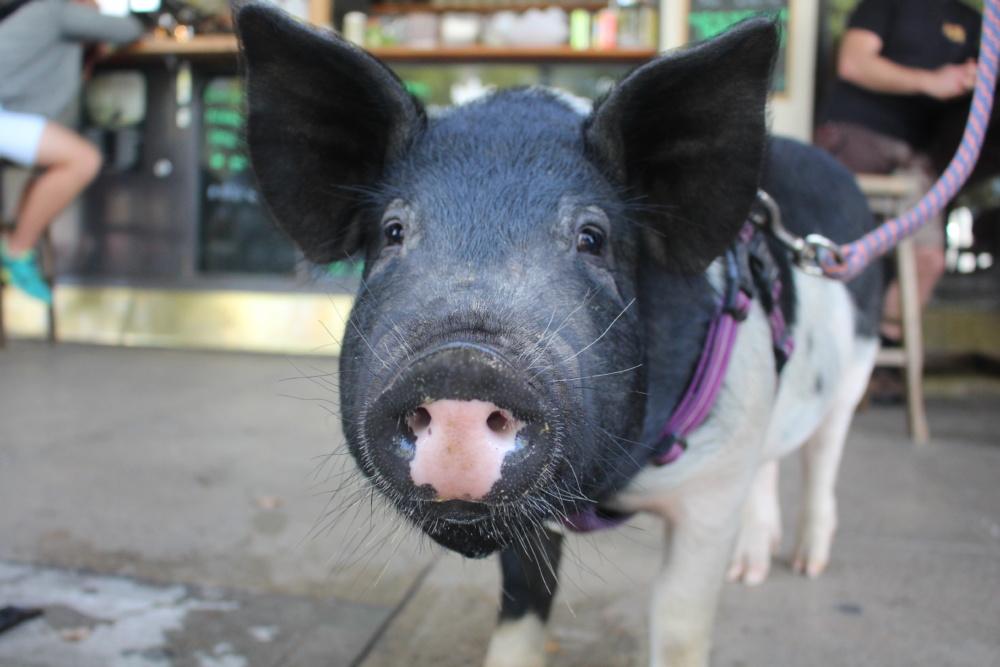 Man nennt mich die Schweineflüsterin