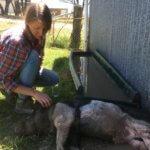Tiergestützte Therapie, Tiergestützt, wwoofen